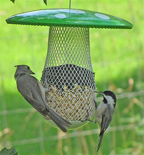 the best bird feeder to attract more wild birds suitable