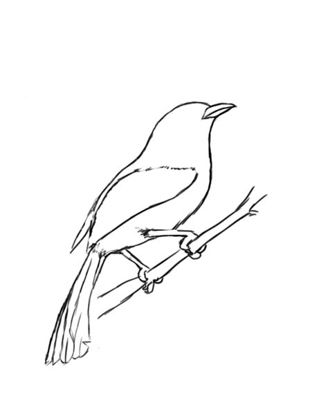 how to draw doodle birds how to draw a bird draw central