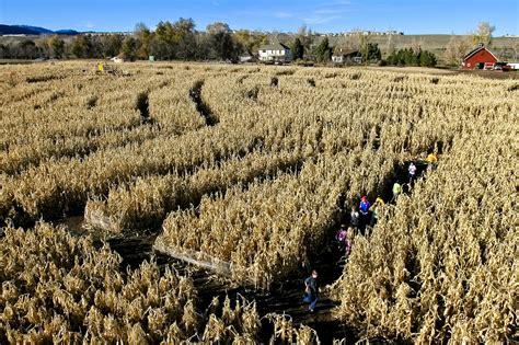 botanical gardens corn maze the botanic garden s annual corn maze near chatfield