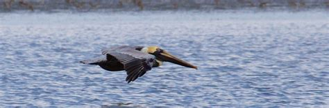 birds of the everglades island walkabout