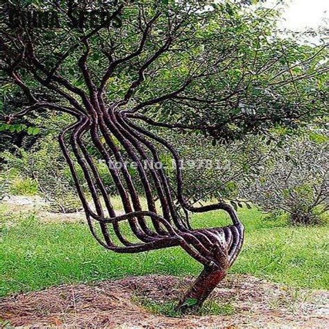 Polibag Tanaman Isi 10 Pcs Pack 30pcs pack garden chair tree seeds outdoor ornamental plant tree seed for home garden