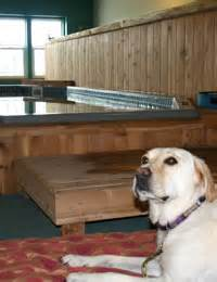 fce in dogs maggie aquatic therapy helps rehabilitate fce la paw spa