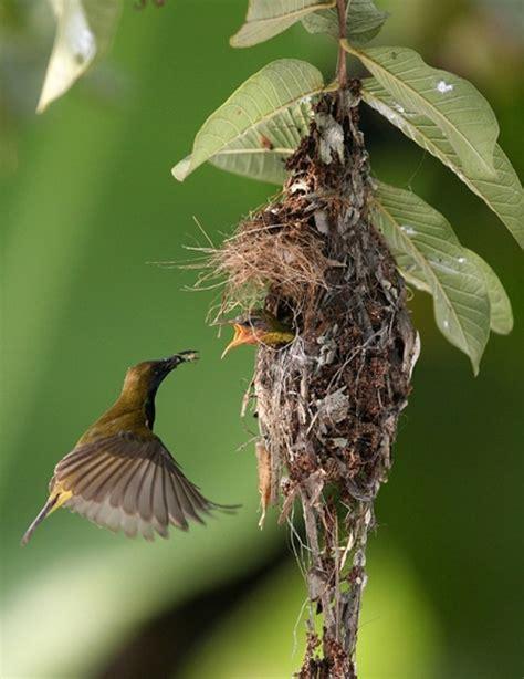 mama birds feeding baby birds 8 heart warming photos