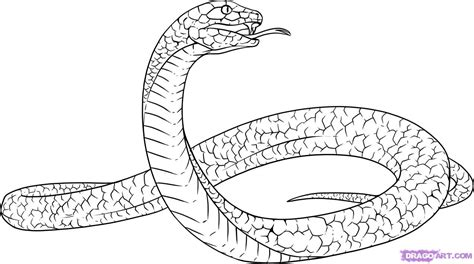 how to draw a black mamba step by step snakes animals