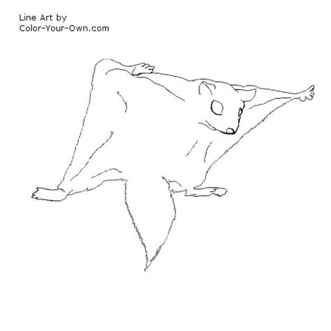 wildlife flying squirrel coloring page