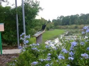 Largo Botanical Garden Botanical Garden Black Egret Largo Florida Flickr Photo