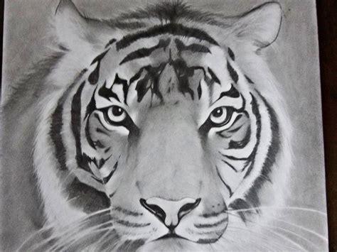 dibujos realistas en lapiz dibujo tigre a lapiz quot intento realista quot arte taringa