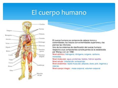 el cuerpo humano que elementos qu 237 micos importantes para el cuerpo humano