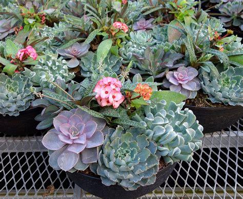 home depot landscaping plants plan