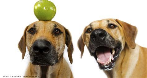 alimenti che i cani non possono mangiare 10 frutti che i cani possono mangiare sweetanimals