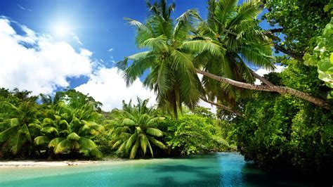 Tropical L by Palmiers Tropical Mer L Eau Bleue 233 T 233 Fonds D 233 Cran