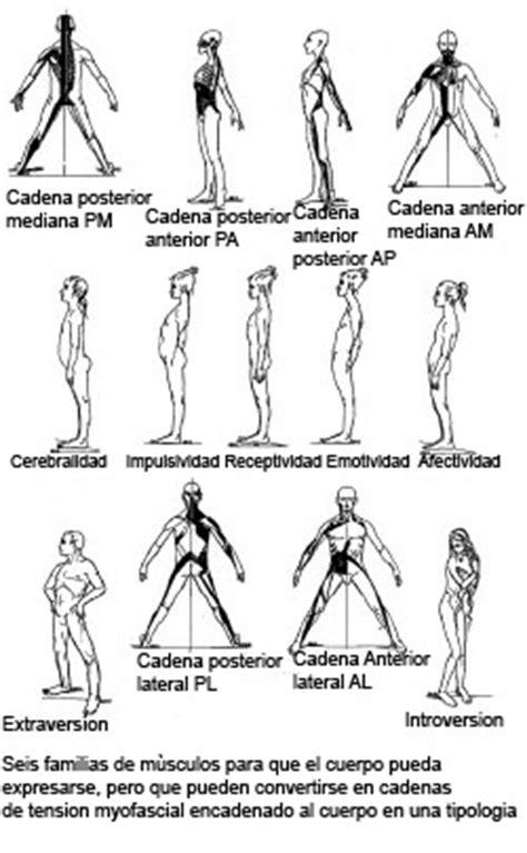 le relais equi gimnasia - Cadenas Musculares Segun Kabat