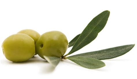 How To Make An Olive L by Dimanche 9 D 233 Cembre F 234 Te De L Olive 224 Corconne Le