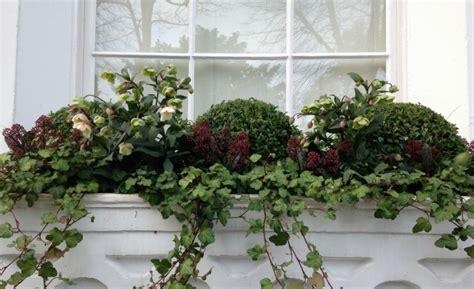 winter window boxes residential and commercial window boxes tulip landscapes