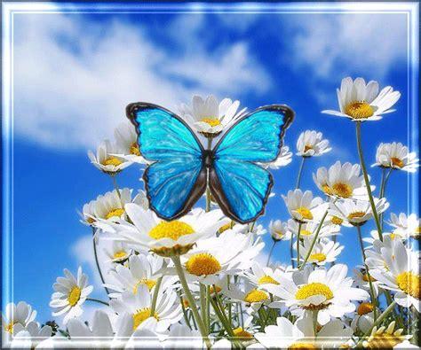 imagenes mariposas en movimiento animados gif de flores y mariposas