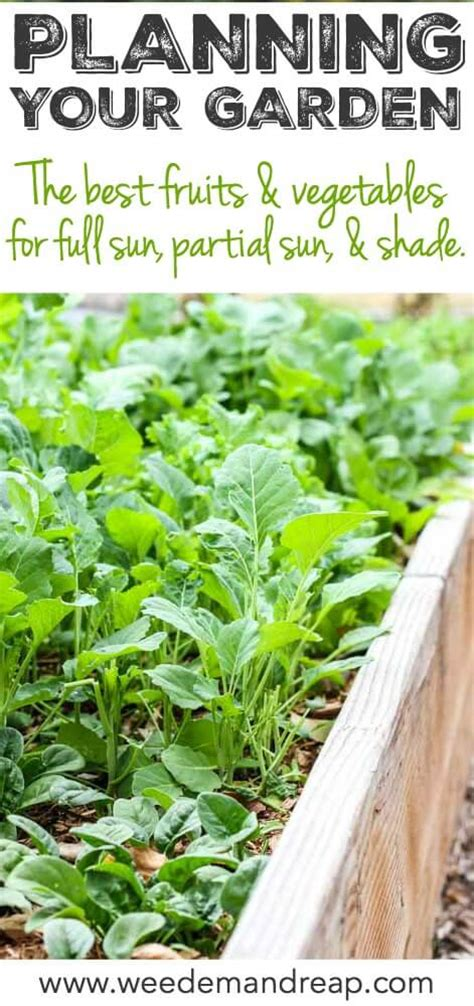 vegetables 4 hours sunlight planning your garden sun partial sun and shade