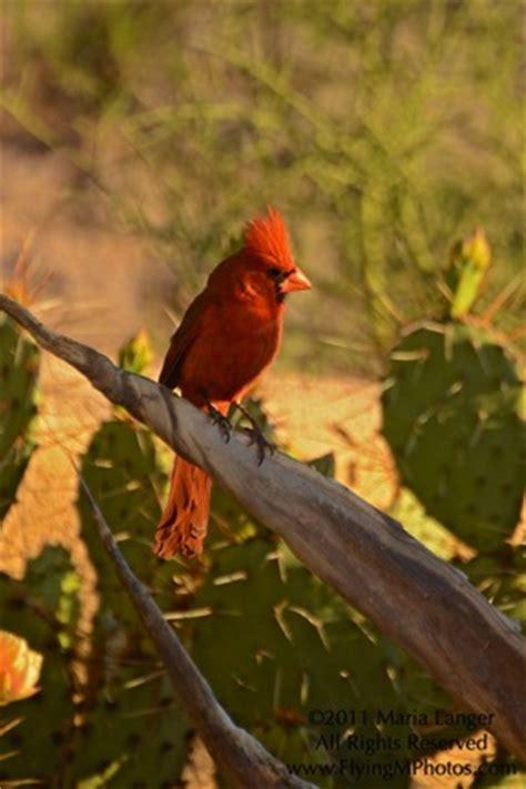 the arizona cardinals an eclectic mind