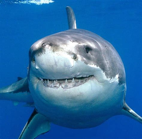 warum haben fische schuppen warum haie schneller schwimmen als andere fische welt