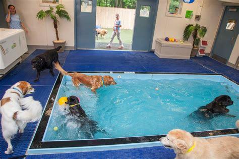 Swim Office by New Year New Doggie Detox Program