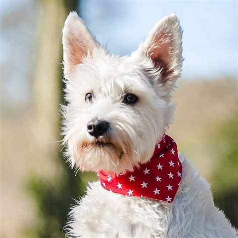 puppy bandanas neckerchief prints by redhound for dogs notonthehighstreet