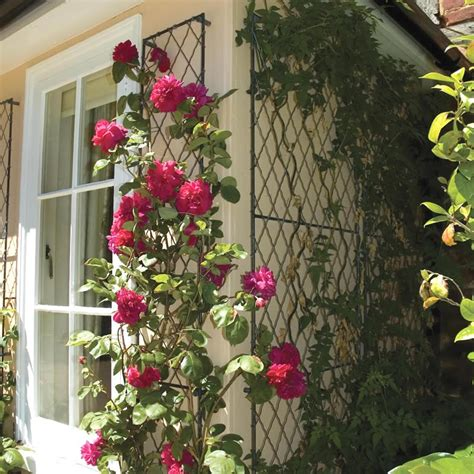 trellis climbing plants trellis to your extraordinary climbing plants