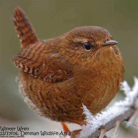 birds and birding 187 klamath call note