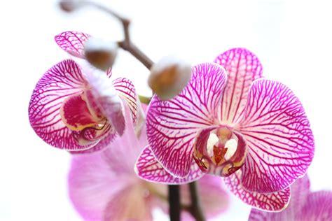 Wie Pflegt Orchideen Richtig 4793 by So Pflegen Sie Ihre Orchideen Richtig Birchmeier