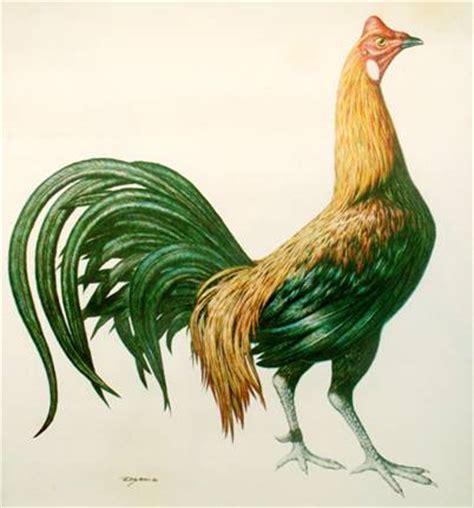 la navaja peruana gallos de pelea gallos peruanos share www gallospedragliofarm com