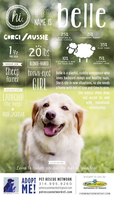 Pet Adoption Poster Series On Behance Adopt Me Flyer Template