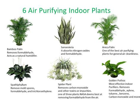 Best Houseplants For Clean Air | three essential houseplants for clean indoor air kamal