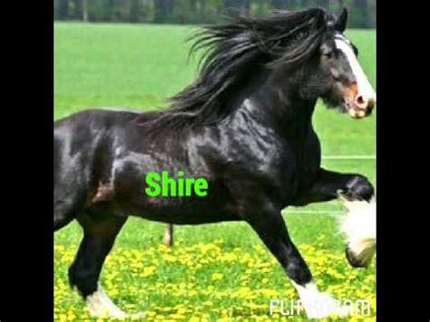 piu al mondo i 10 cavalli pi 249 belli al mondo