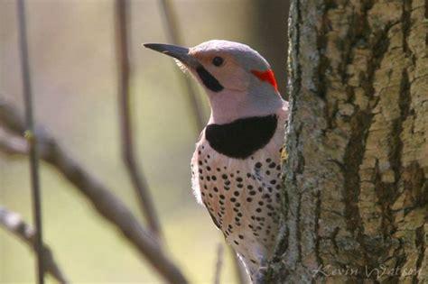 birds of northeast america photo gallery birds of the
