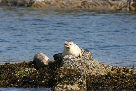 boat trip terms and conditions scottish wildlife jenny wren boat charter