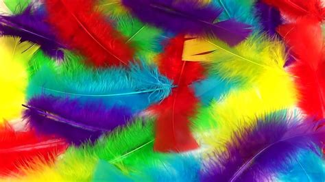 colorful feathers learn colors with colorful feathers children s