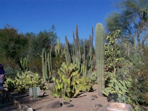 Arizona Botanical Gardens by Desert Botanical Gardens Arizona Picture Of