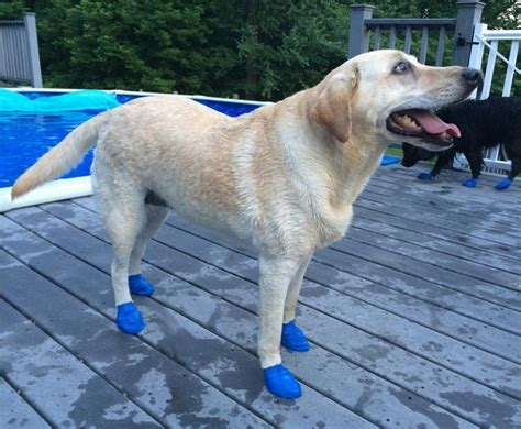 booties for dogs water boots pool shoes for swimming