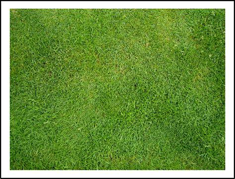 Rumput Swiss By Tukang Rumput kreasi taman indah daftar harga tanaman