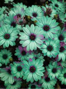 mint colored flowers 25 best ideas about mint green flowers on