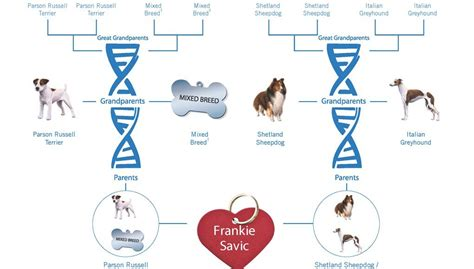 breed dna test dna test breed test wisdom panel canine dna testing breeds picture