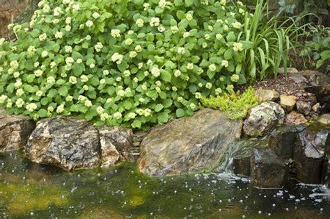 aquascape outdoor aquascape your landscape livin the outdoor lifestyle