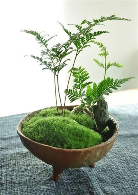 moss garden jardin de musgo decoracion plantas