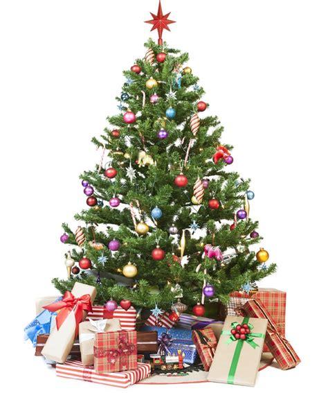 imagenes de jardines en navidad jardines verticales huichol c 243 mo cuidar un pino de