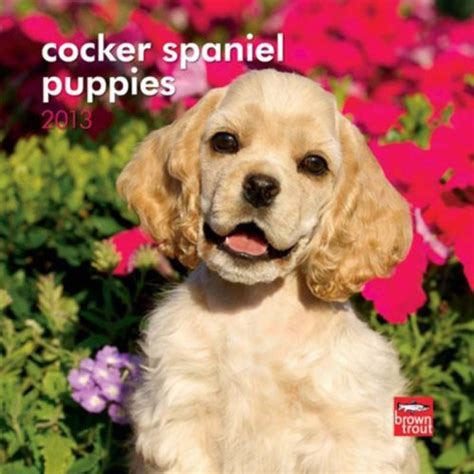 mini cocker spaniel puppies cocker spaniel puppies 2013 mini calendar