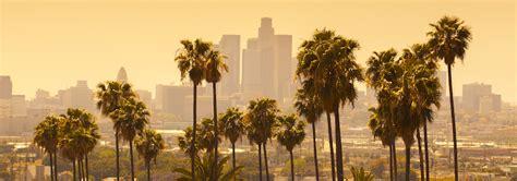image gallery los angeles palm trees - Tree Los Angeles