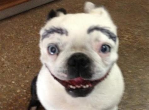 do dogs eyebrows 7 best images about dogs with eyebrows on your and