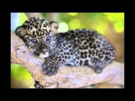 imagenes bonitas de animales los diez animales bebes mas lindos del mundo youtube