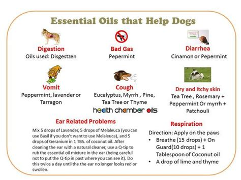 essential oils for itchy dogs amazing websites therapy and skin care on