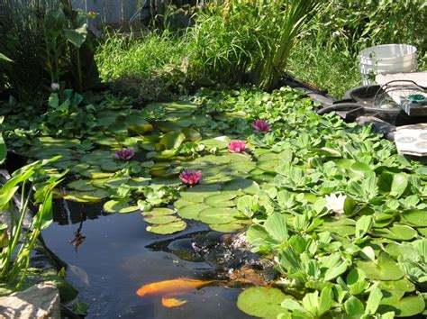Backyard Pond Images by Pond Photos Pictures Garden Pond Photo Gallery Water