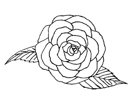 small rose coloring page biologische rozenkwekerij de bierkreek kleurplaten