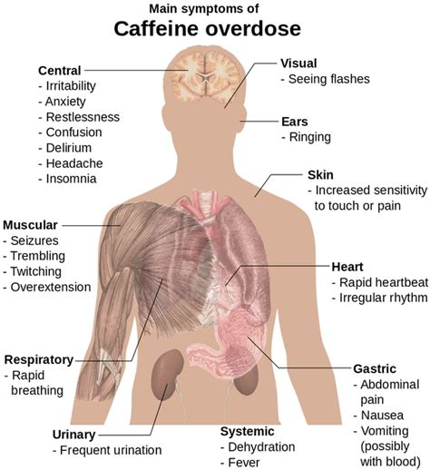How To Get Through A Caffiene Detox During School by What Are The Negative Effects If Any Of Term